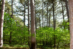 Лес у подножья Ай-Петри