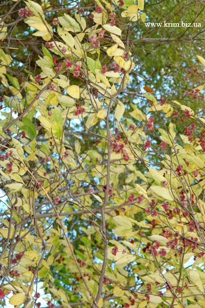 Лесные осени цветы