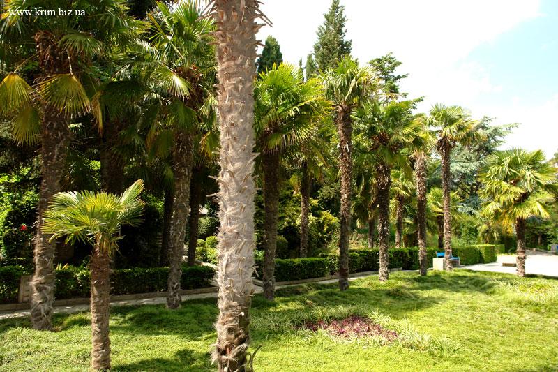 Парк санатория Гурзуф