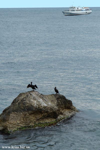 Морской этюд, фото в Береговом