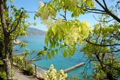 Ливадия.  На берегу моря