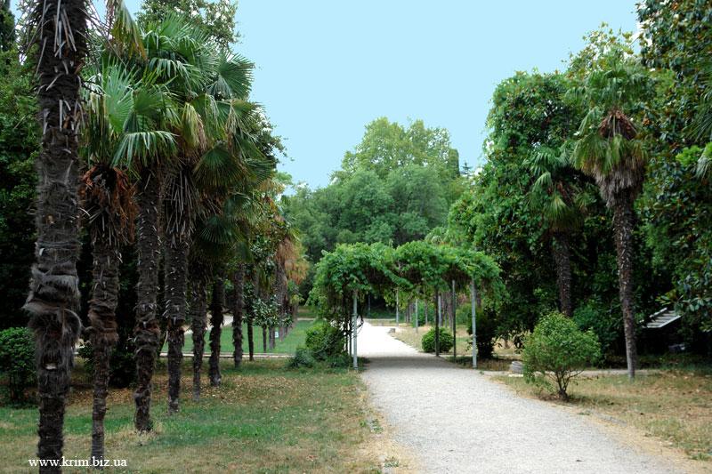 Парк Мисхора, пальмовая аллея