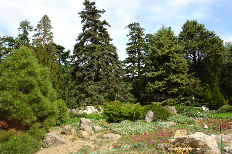 Парк, Никитский Ботанический Сад