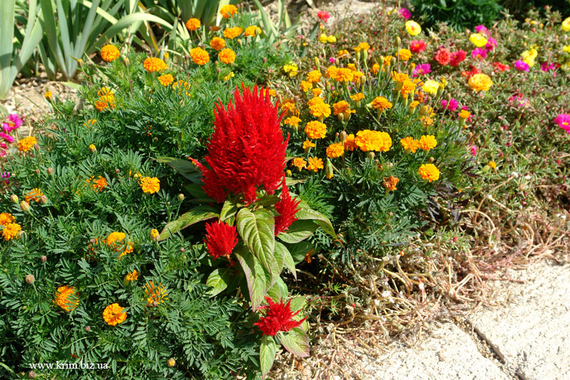 Цветы Никиты