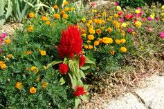 Никитский сад. Цветы
