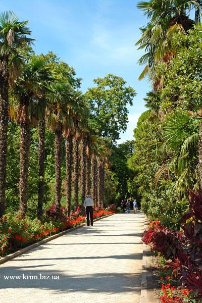 Пальмовая аллея. Никитский Ботанический Сад