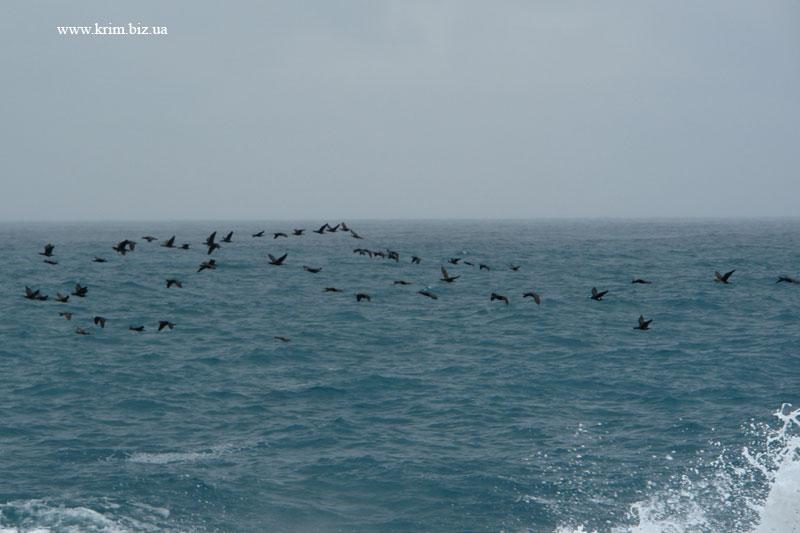 Фото море Симеиз перелётные птицы