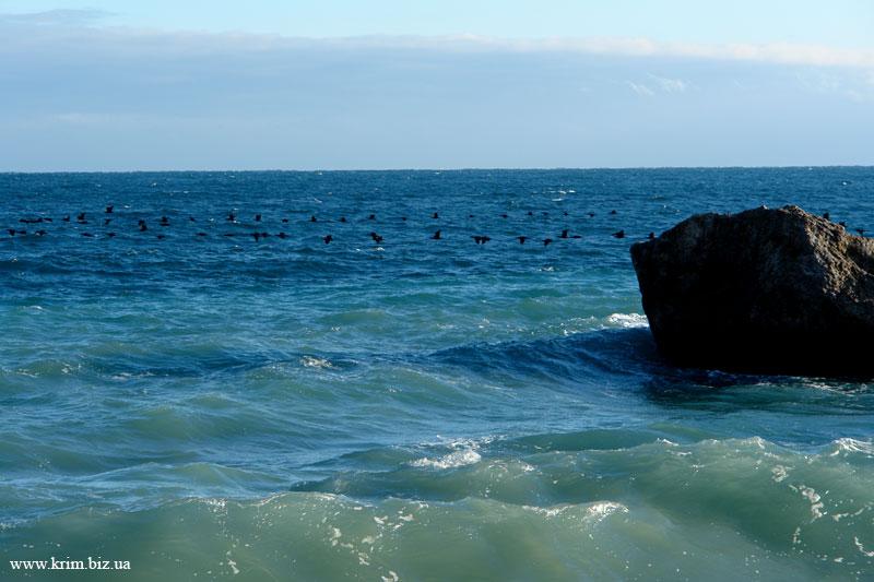 Стая перелётных птиц над морем