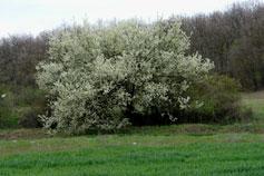Крым. Весна в лесу в окрестностях Симферополя