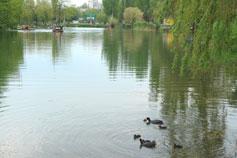 Симферополь. Гагаринский парк. Озёра