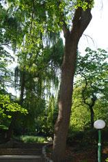 Крым - парк