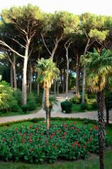 Поляна итальянских пиний в парке санатория Карасан