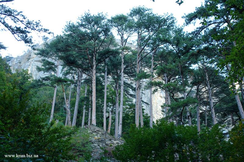 Лес над Ялтой
