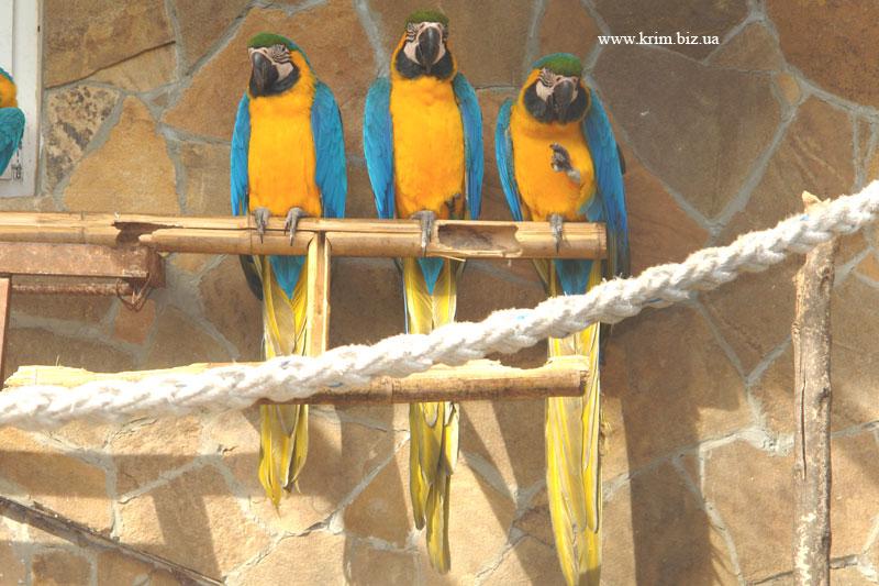 Ялтинский зоопарк Сказка. Попугай Ара сине-желтый